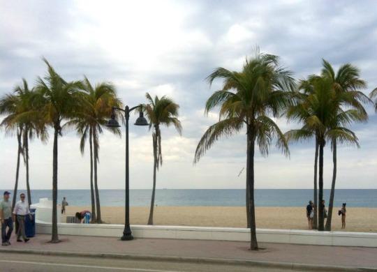 Florida - Palm Trees