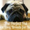 The Perfect Pal - Best Dog Breeds for Kids