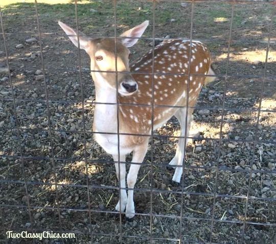 Visiting Lake Tobias Wildlife Park and Zoo