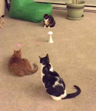 Cat Toys Your Furry Friend Will Flip For by FroliCat