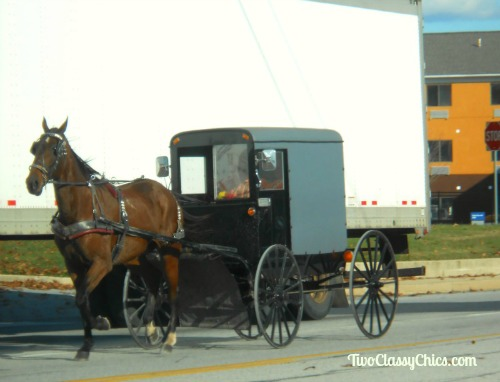 Amish Horse and Buggy in Lancaster County