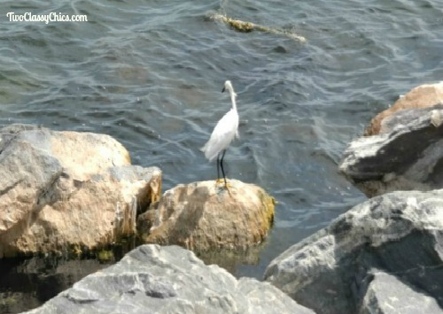 Birdwatching - The Beautiful Birds at the Shore