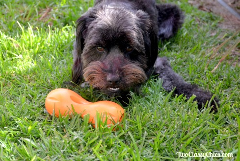 Keep Your Pooch Pleasantly Puzzled with the Qwizl Dog Treat Toy