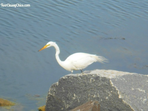 Birdwatching – The Beautiful Birds at the Jersey Shore
