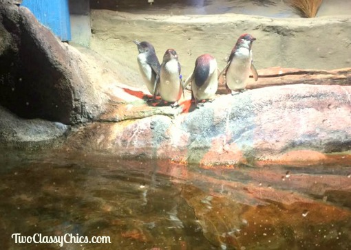 Visiting the Adventure Aquarium in Camden