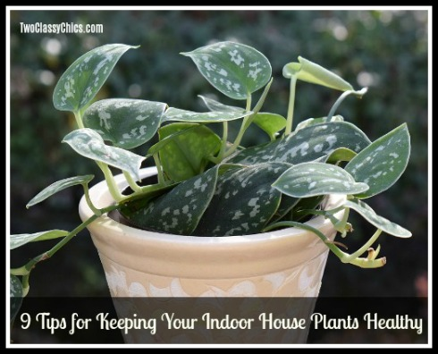 9 Tips for Keeping Your Indoor House Plants Healthy