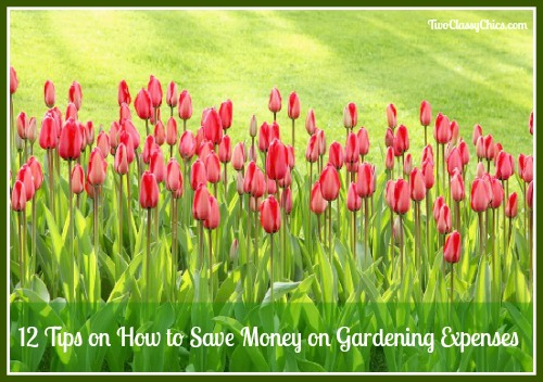 12 Tips on How to Save Money on Gardening Expenses
