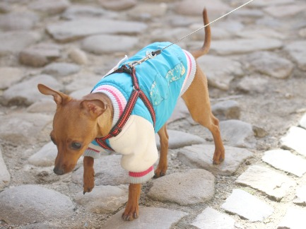 How to Find Fancy & Cute Dog Clothes for Your Beloved Pooch