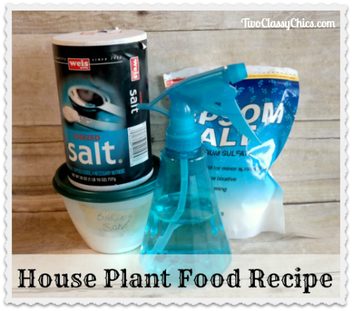Best Homemade House Plant Food Recipe