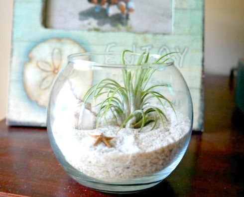 Gardening: Making Your Own Air Plant Terrarium