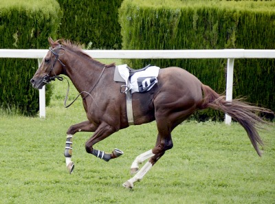 Arabian Horses May Be The Best for Endurance Horse Racing but Other Breeds Can Excel