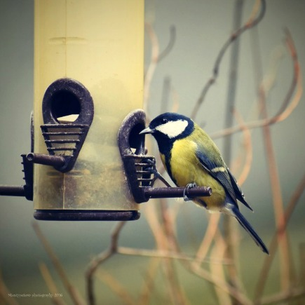 Top Tips for Bird Watching – What to Look for in Binoculars